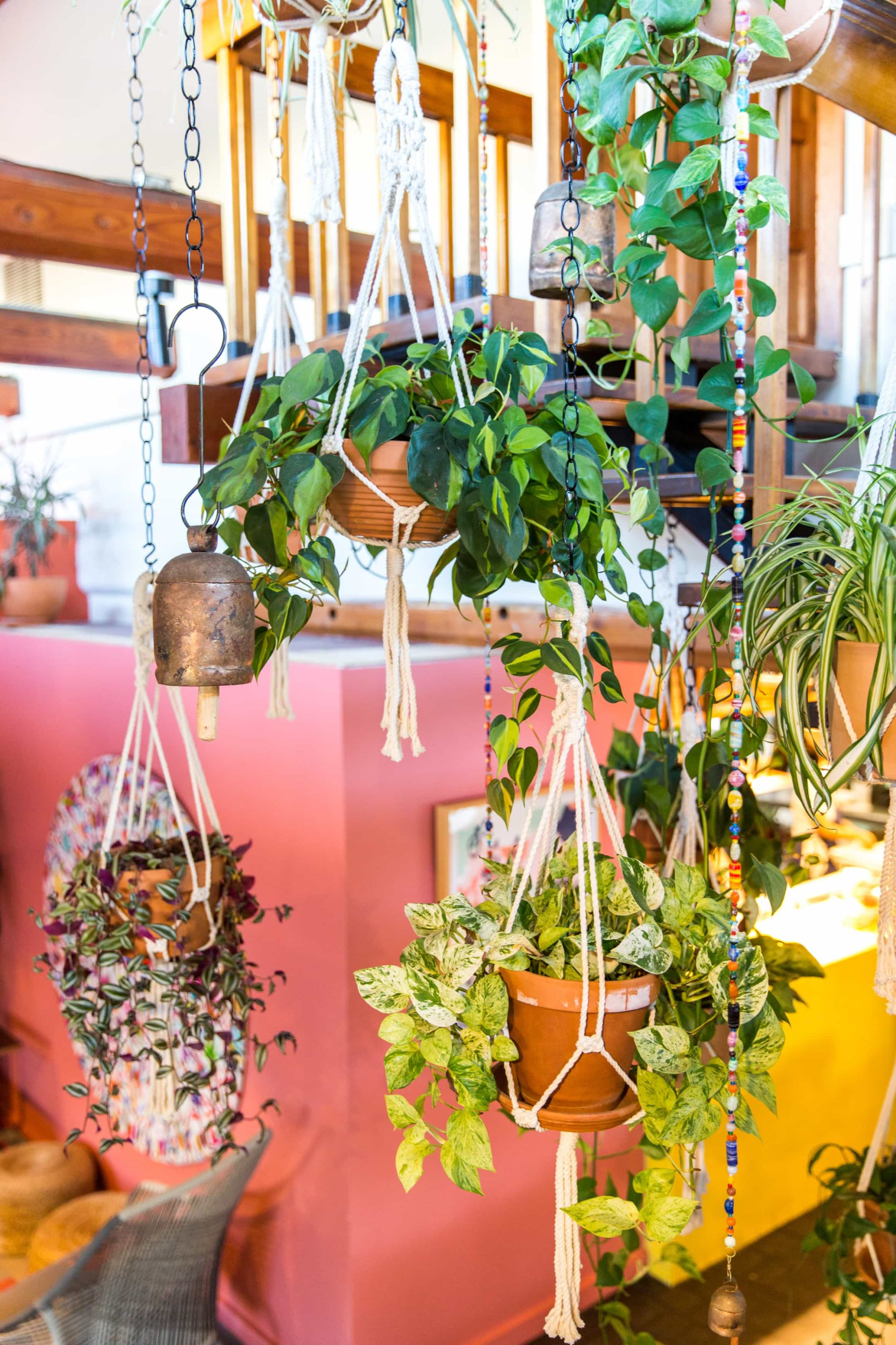 Hanging plants along staircase